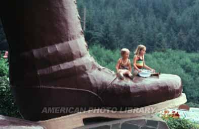 レッドウッド国立公園の画像 p1_18
